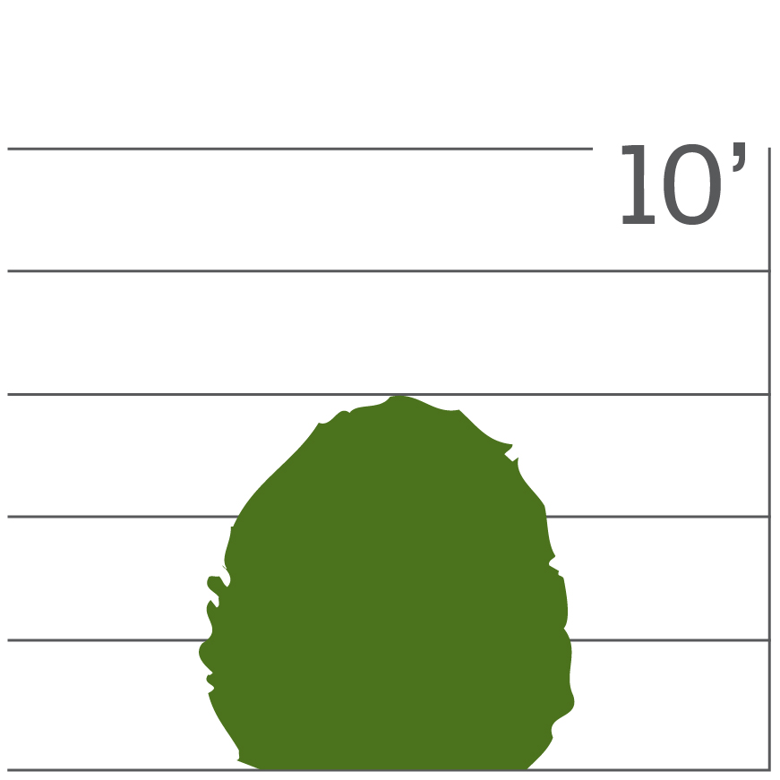 icon visually displaying the size and shape of this plant variety