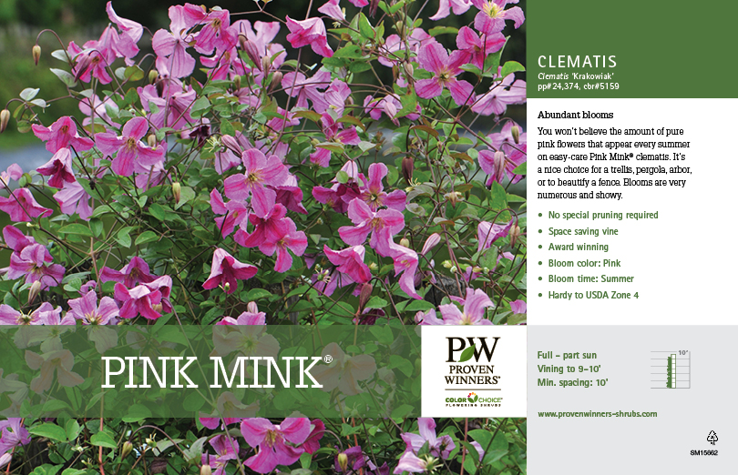 Proven winners colorchoice pink mink clematis retail benchcard download resource mightylinksfo