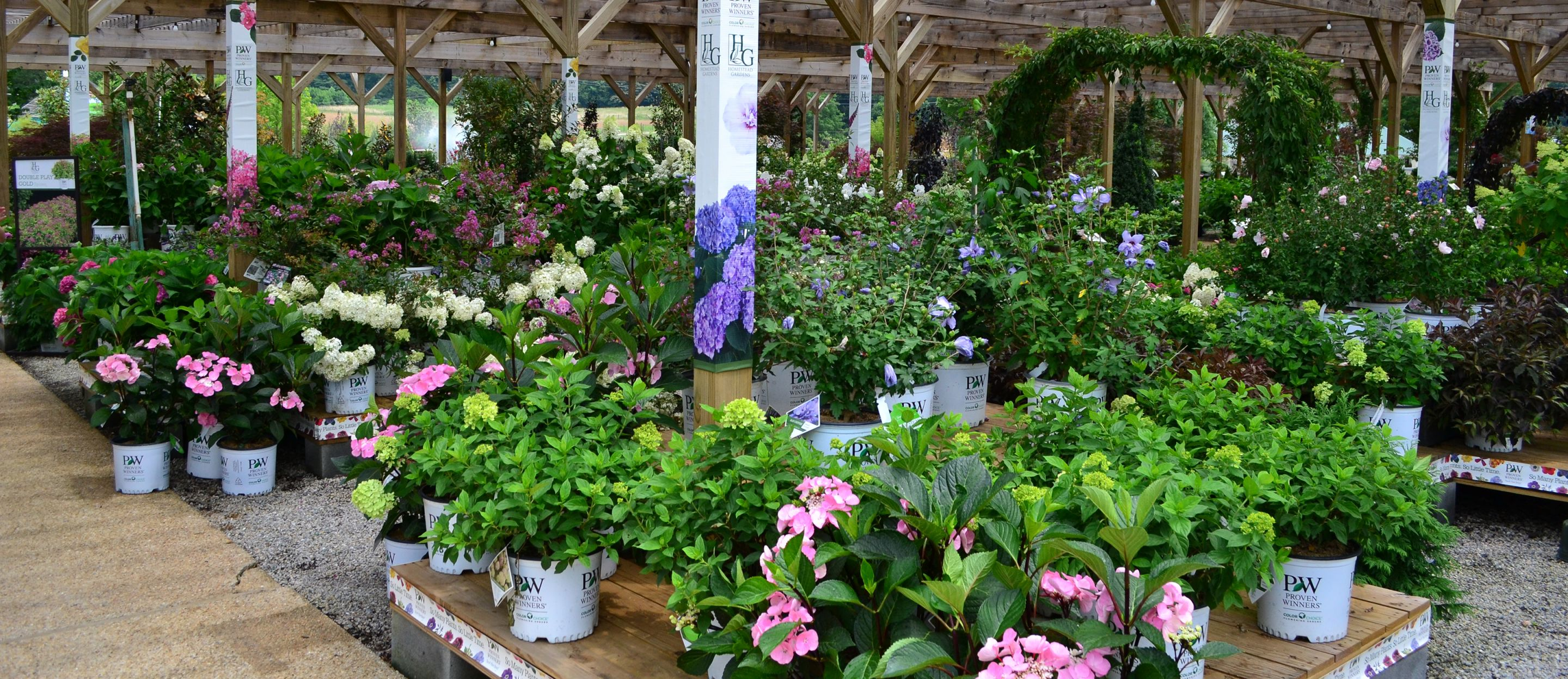 Overflowing Retail Garden Center Display Of Proven Winners Colorchoice Shrubs