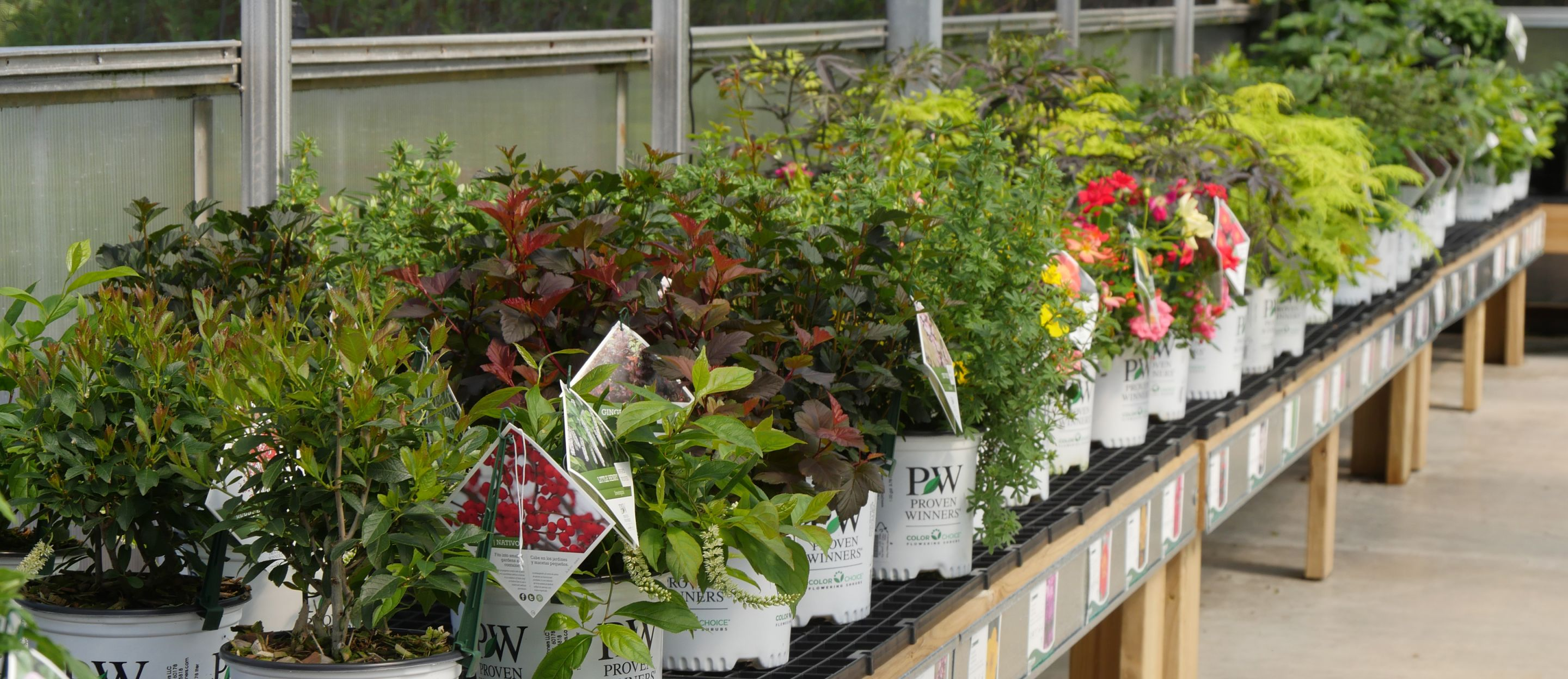 Colorful Display Of Proven Winners Colorchoice Shrubs At Garden Center