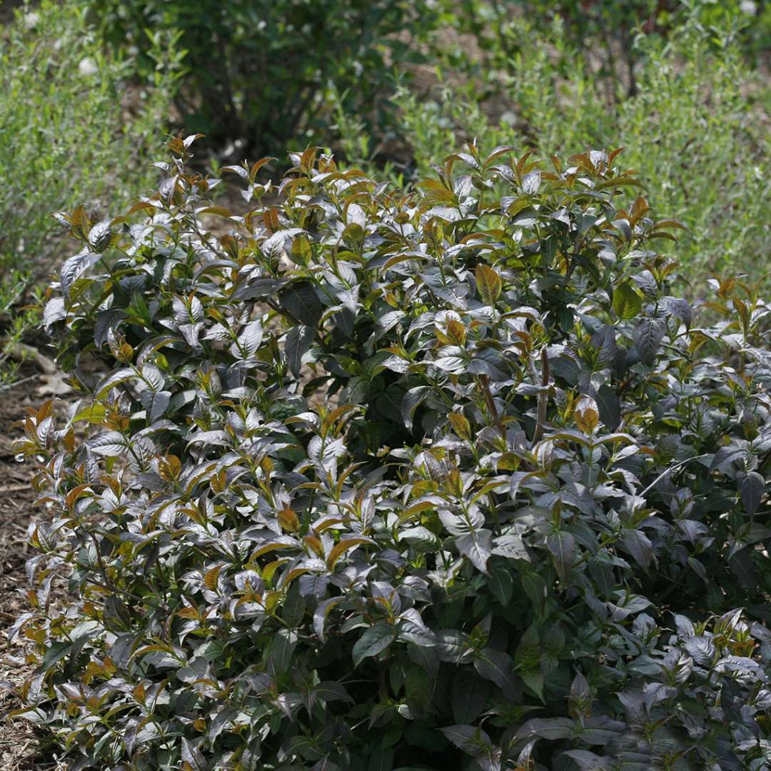 Garden Bush: Spring Meadow - Wholesale Liners
