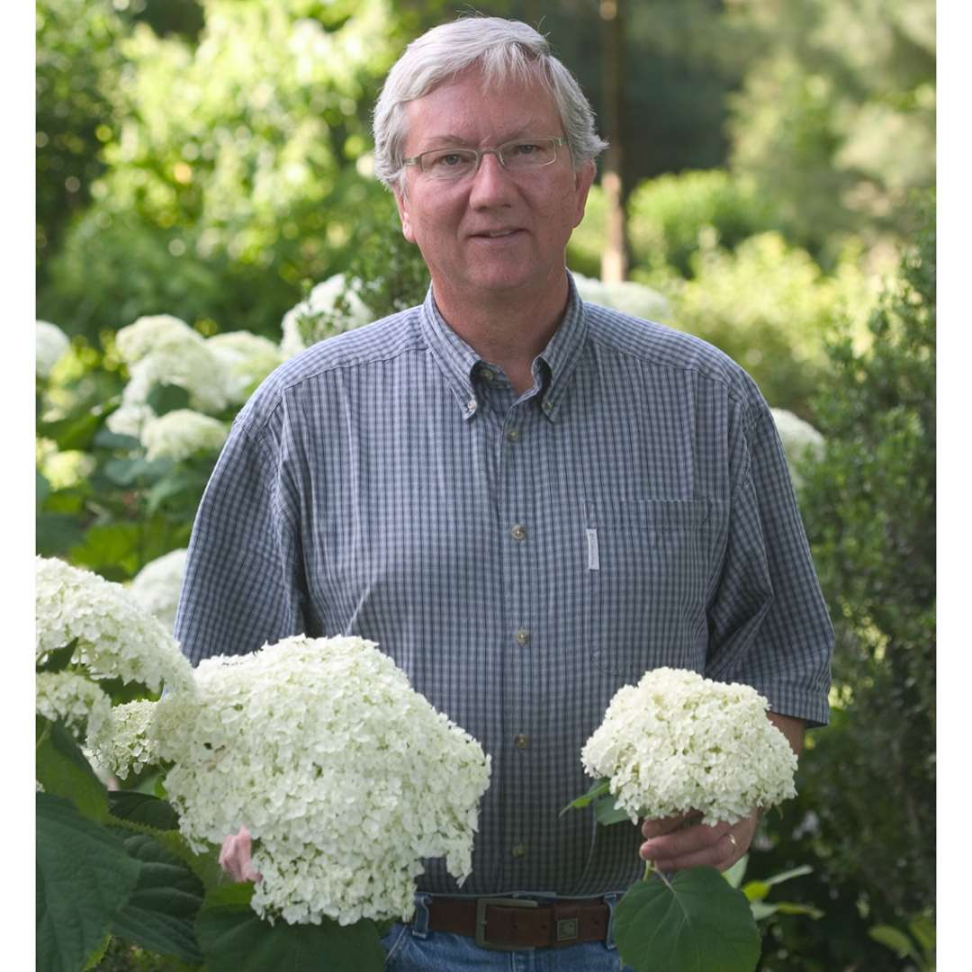 A man holding Annabelle hydrangea in his left hand and Incrediball hydrangea in his right showing how much larger the Incrediball bloom is