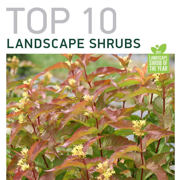 Top 10 Shrubs of 2021