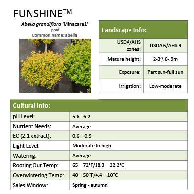Funshine® Abelia Grower Sheet