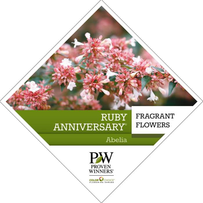 Proven Winners® ColorChoice® Ruby Anniversary® Abelia Tag