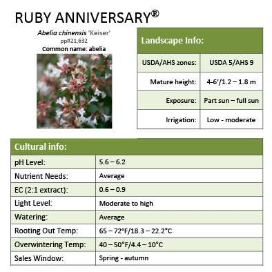 Ruby Anniversary® Abelia Grower Tips
