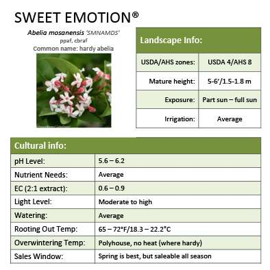 Sweet Emotion® Abelia Grower Sheet