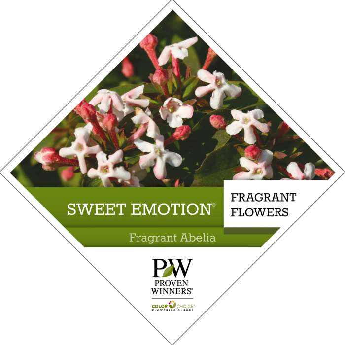 Proven Winners® ColorChoice® Sweet Emotion® Abelia Tag