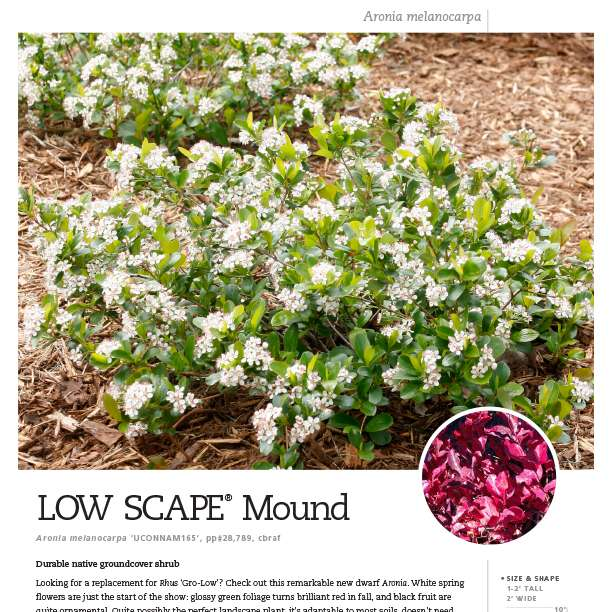 Low Scape Mound Aronia Spec Sheet