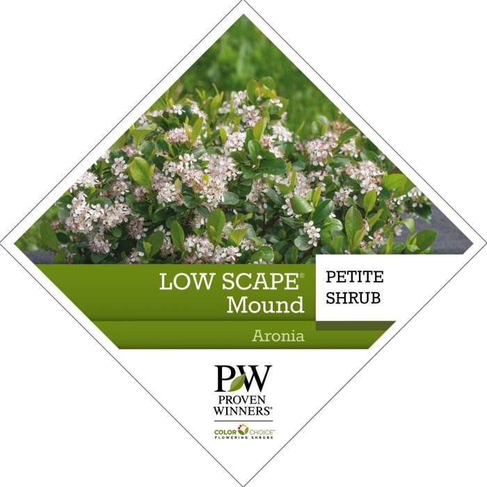 Proven Winners® ColorChoice® Low Scape Mound Aronia Tag