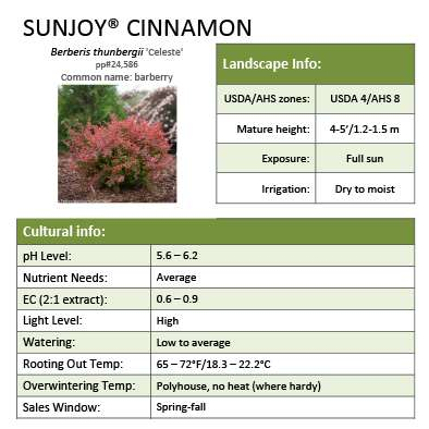 Sunjoy® Cinnamon Berberis Grower Sheet