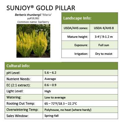 Sunjoy® Gold Pillar Berberis Sheet