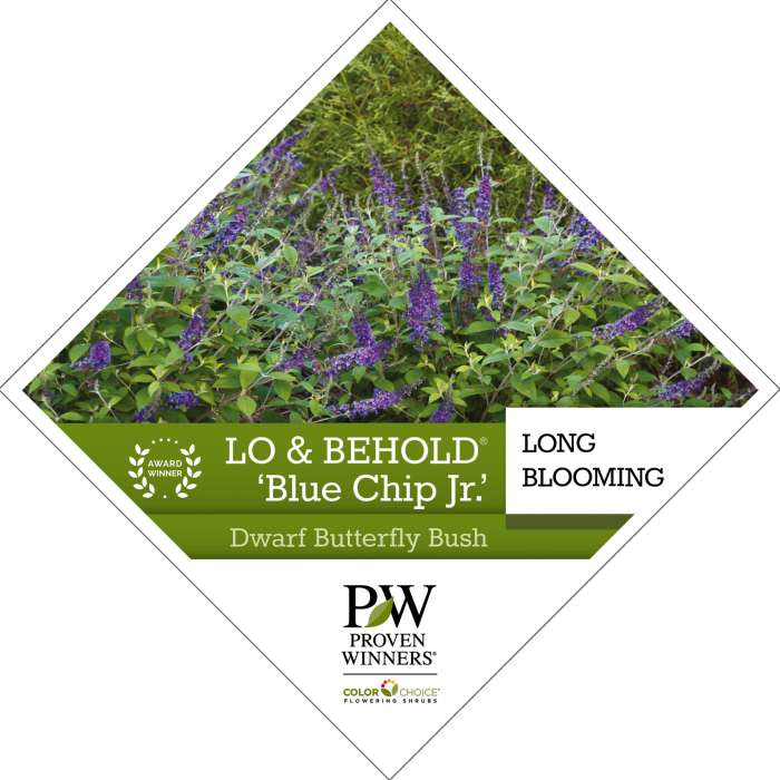 Lo & Behold® 'Blue Chip Jr.' Buddleia tag
