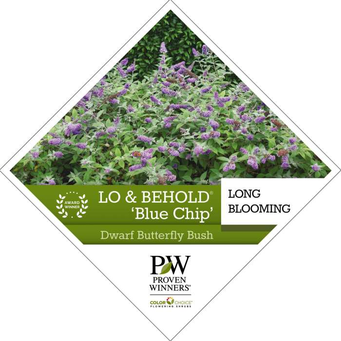 Lo & Behold® 'Blue Chip' Buddleia tag