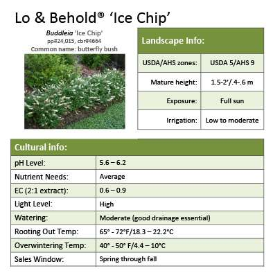 Lo & Behold® 'Ice Chip' Buddleia grower sheet