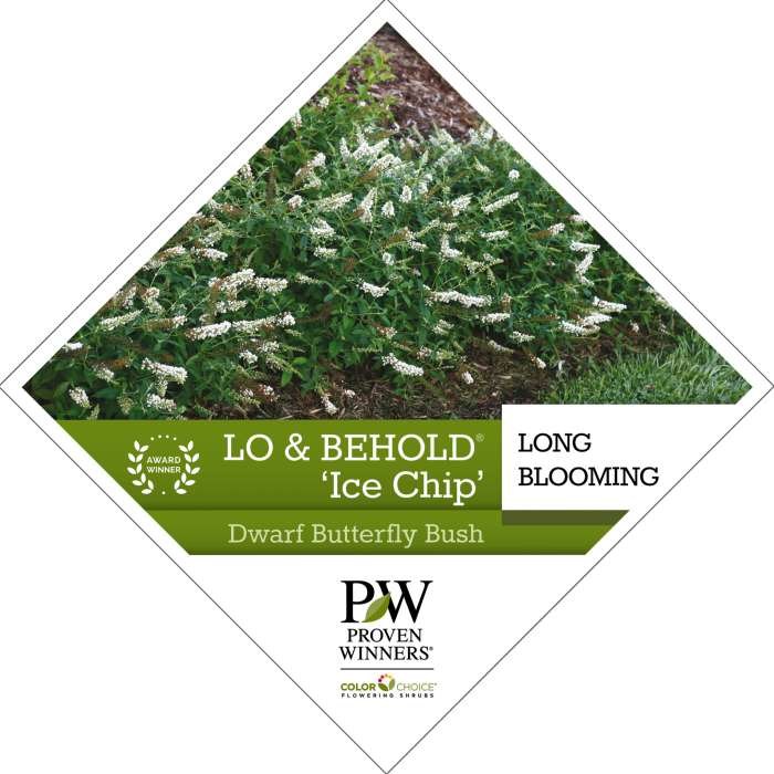 Lo & Behold® 'Ice Chip' Buddleia tag