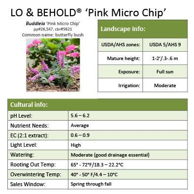 Lo & Behold® 'Pink Micro Chip' Buddleia grower sheet