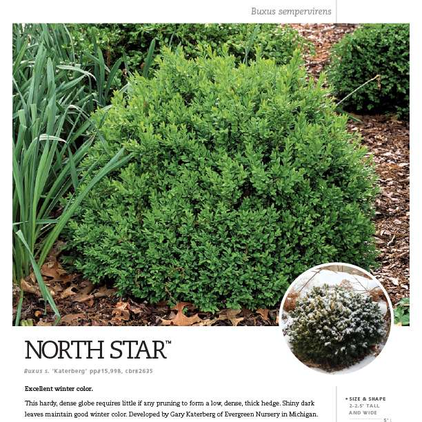 North Star® Buxus spec sheet