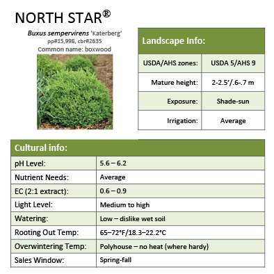North Star® Buxus grower sheet