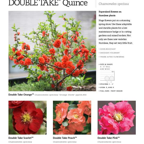 Double Take™ Chaenomeles Series Spec Sheet