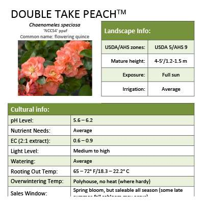 Double Take Peach™ Chaenomeles Grower Sheet