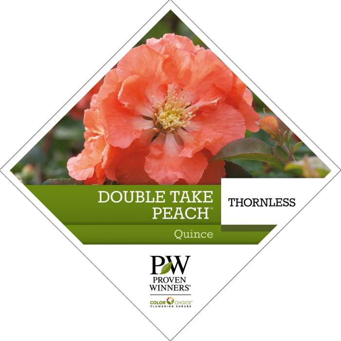 Double Take Peach™ Chaenomeles Tag