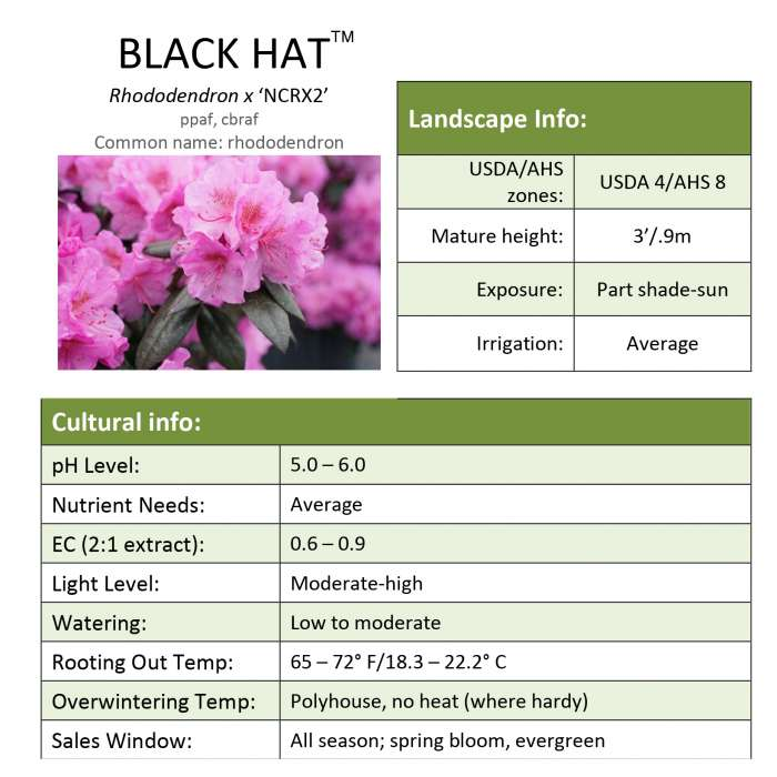 Black Hat Rhododendron grower sheet