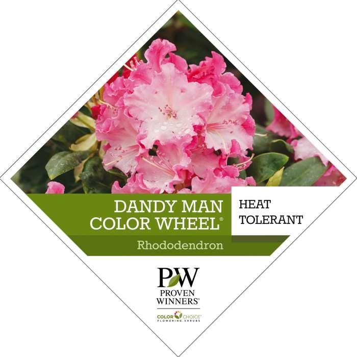 Dandy Man Color Wheel Rhododendron Tag Spring Meadow Nursery