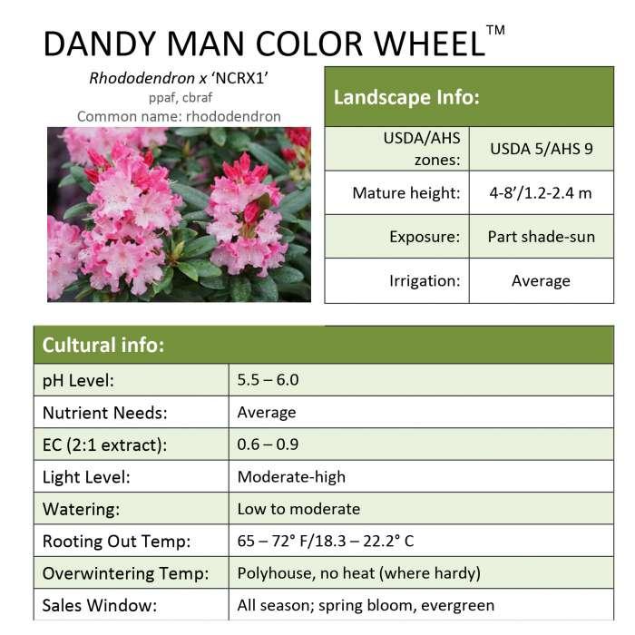 Dandy Man Color Wheel Rhododendron Grower Sheet Spring Meadow